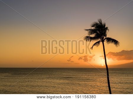 Sun setting behind single palm tree off Hawaiian island of Maui with island of Molokai in background
