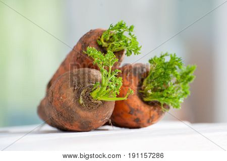 Three Grown Carrots With A Tops On A Wooden Table Close-up..