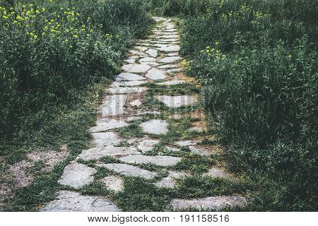 Stone footpath running among Dense green grass, can be used as wallpaper