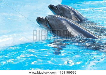 Two dolphins poked his nose out of the water and put it not the platform