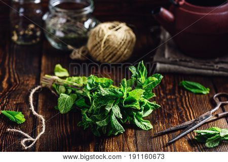 Bunch of Mint with Rusty Scissors. Tangle with Two Jars and Teapot on Backdrop.