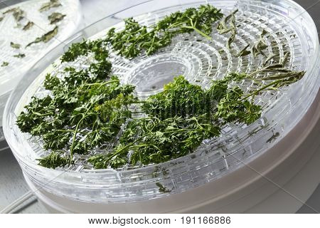 drying herb using a dehydrator tray machine
