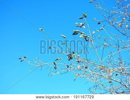 Branches and leaves (just a few) of a tree. Cloudless light-blue sky at the background. Generic vegetation