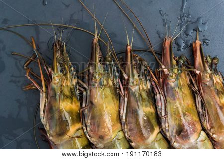 Raw Fresh Jumbo Tiger Sea Shrimp On Black Granite