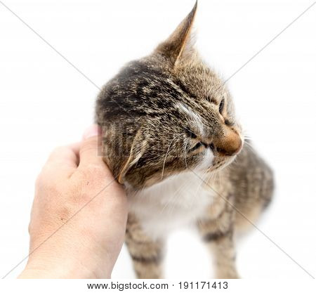 Man caresses a cat on a white background .