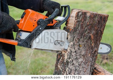 To saw a tree gasoline saw. The man saws a tree. The forester with a saw.gasoline saw