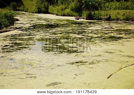 Landscape view of lake with green algae