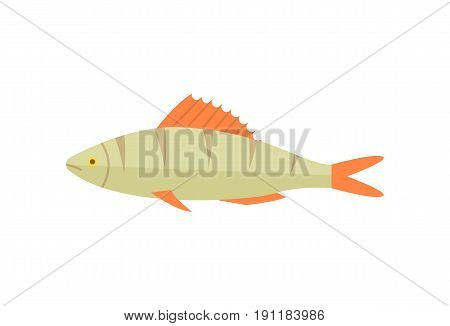 Zander river fish icon. Natural fresh food, healthy food vector illustration isolated on white background in flat design.