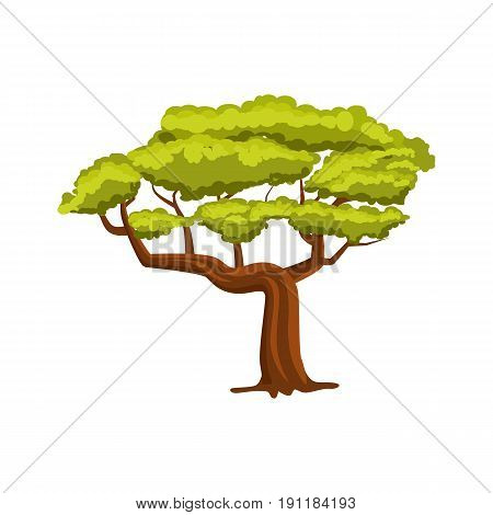 Oak green tree vector icon. Forest element in cartoon style vector illustration isolated on white background.