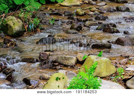 Mountain stream in a forest. mountain stream