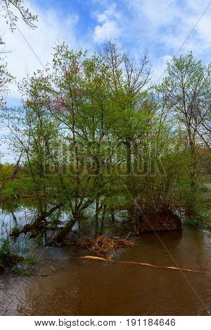 Old tree trunks in a flooded valley after heavy rain showing very verdant conditions