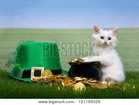 White kitten sitting up with paws cover pot of gold coins spilling over onto grass green Leprechaun hat laying next to it. Green grass field off to the skyline. Copy space.
