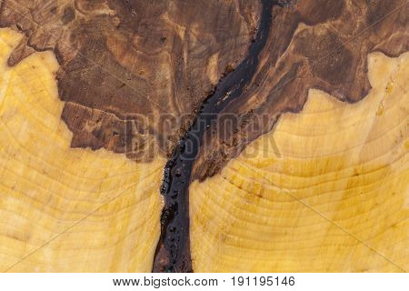 Closeup, macro of a sawed birch stump. Texture and pattern on the surface, annual rings, marrow, heartwood and chain saw.