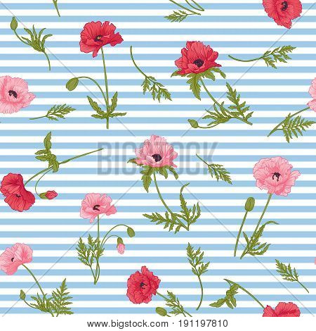 Seamless pattern with pink and red poppy flowers in botanical style on white and blue stripes background. Stock line vector illustration.