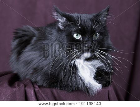 Beautiful domestic cat on red background