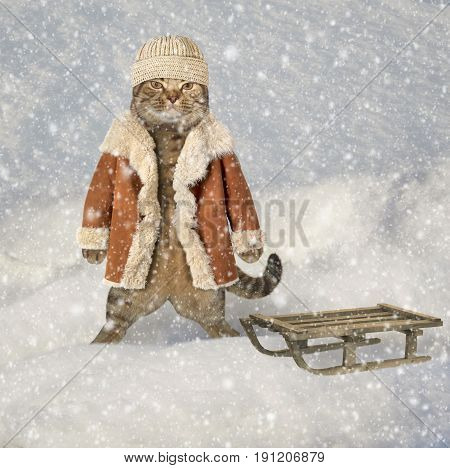 The cat is standing next to a sled. He is wearing a hat and winter coat.