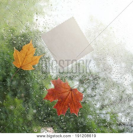 Patterned blank card and maple leaves flew to the window along with raindrops / air autumn message