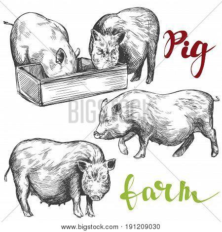 farm, pig set hand drawn vector illustration realistic sketch