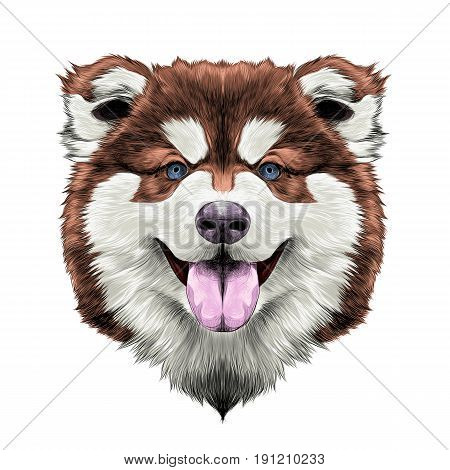 dog breed Alaskan Malamute puppy with his tongue hanging out head looking right symmetry sketch vector graphics color picture