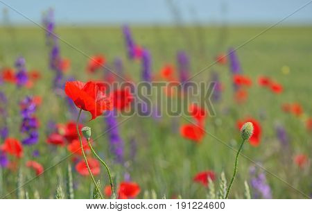 colorful flowers on field in summer, spring time