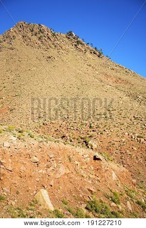 The    Dades Valley  Atlas   Ground Tree  And