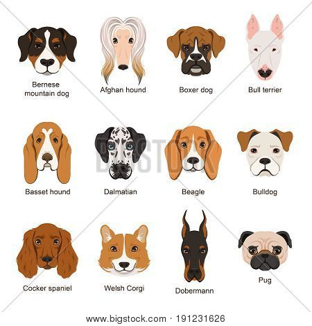 Different dogs. Vector illustrations set isolate on white. Friendly adorable dog friend