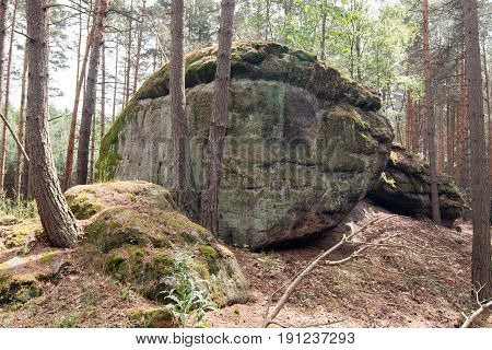 Sandstone rock formation in the pine forest