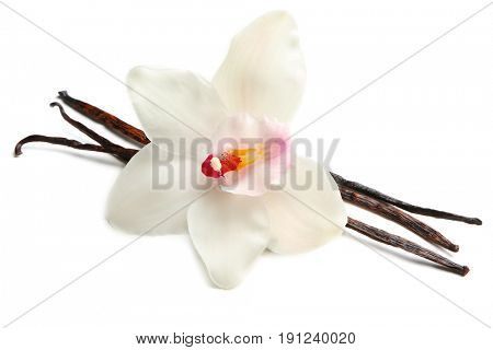 Dried vanilla sticks and flower on white background, closeup