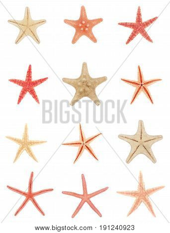 version starfish isolated on a white background