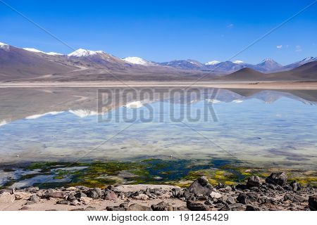 Clear altiplano laguna in sud Lipez reserva Eduardo Avaroa Bolivia poster