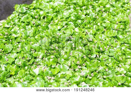 Agriculture and Seeding Plant seed growing in Farm