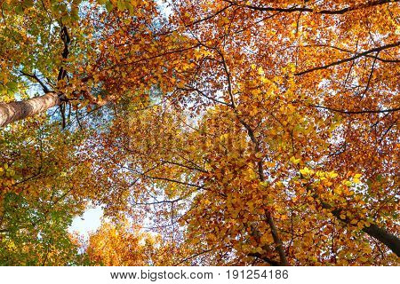 Autumn tree crowns. Abstract background