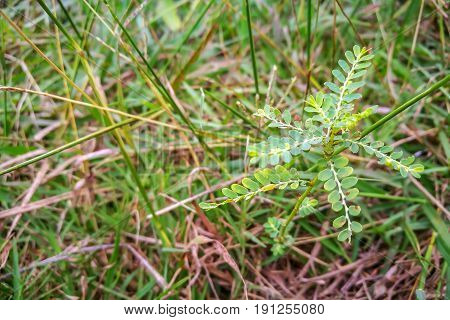 small plant growing from seed in the green grass.