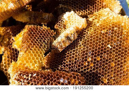Bee on honeycomb, honey from wild bees.