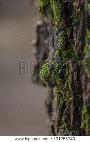 Green mos backgroundStone cover with green mos in tropical rain forest.selected focus