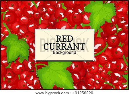 Rectangle label on ripe red currant background. Vector card illustration. Red berry fresh and juicy currant for packaging design food, juice, jam, ice cream, smoothies, detox, cosmetics cream, tea