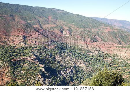 The    Dades  Atlas Moroco Africa   Tree  And Nobody
