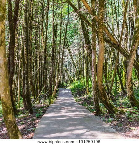 Concrete Pathway In Green Forest.