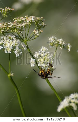 a bee at a field in spring