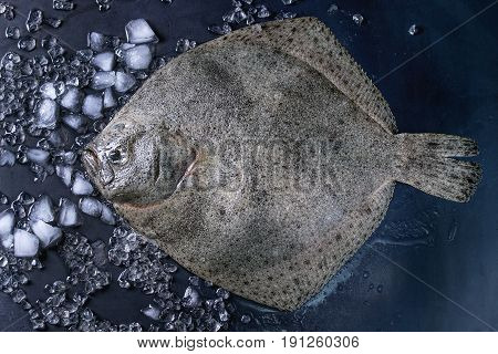 Raw fresh whole flounder fish on crushed ice over dark wet metal background. Top view with space