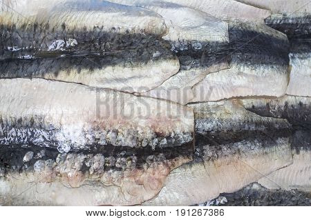 Sardine filets from Northeast Atlantic Spain. Closeup