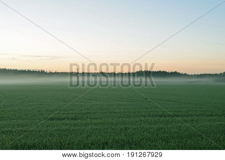 Early morning summer landscape in Finland .Green field with haze.