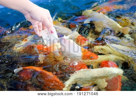 Women's hands are feeding fish from baby bottles.