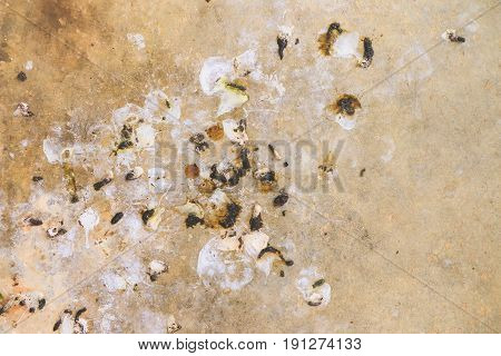 Close up bird droppings on the cement floor
