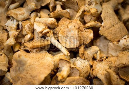 Pile of Dried Shiitake Mushrooms Close Up Background. Healthy Eating.