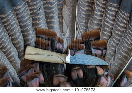A fixed blade Damascus knife lays on top of a turkey feather fan