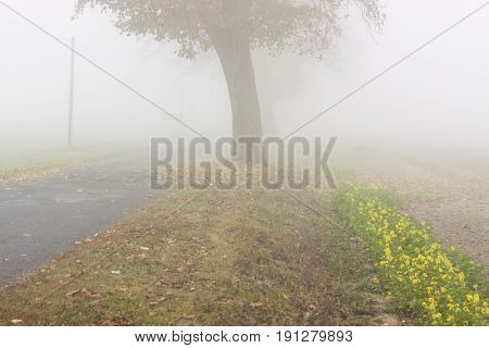 View on Autumn foggy day in Poland.