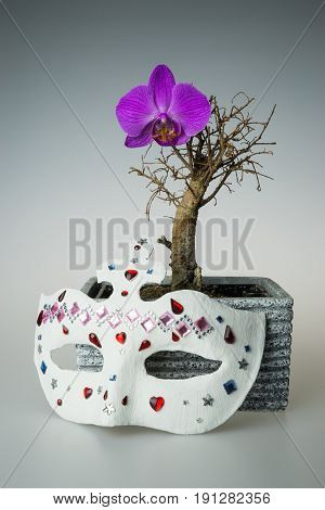 Dry bonsai tree with purple orchidea flower and white mask