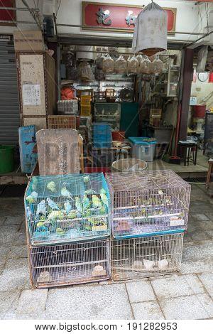 KOWLOON HONG KONG - APRIL 21 2017: Canary Birds in Cages Yuen Po Street Bird Garden in Kowloon Hong Kong.