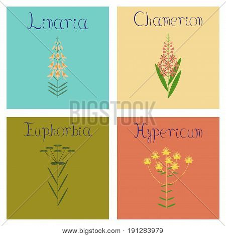 assembly of flat Illustrations Chamerion Linaria Euphorbia Hypericum
